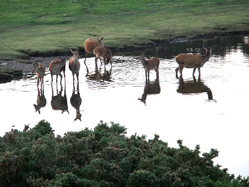 Wild deer are often seen in the village